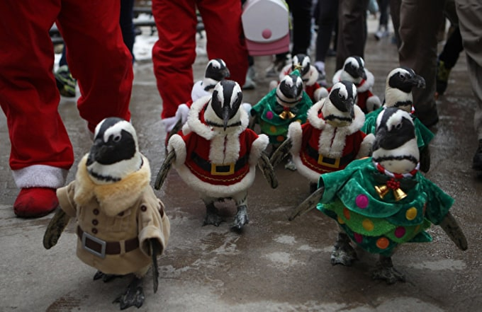 Past Event: Your Own Penguin Parade