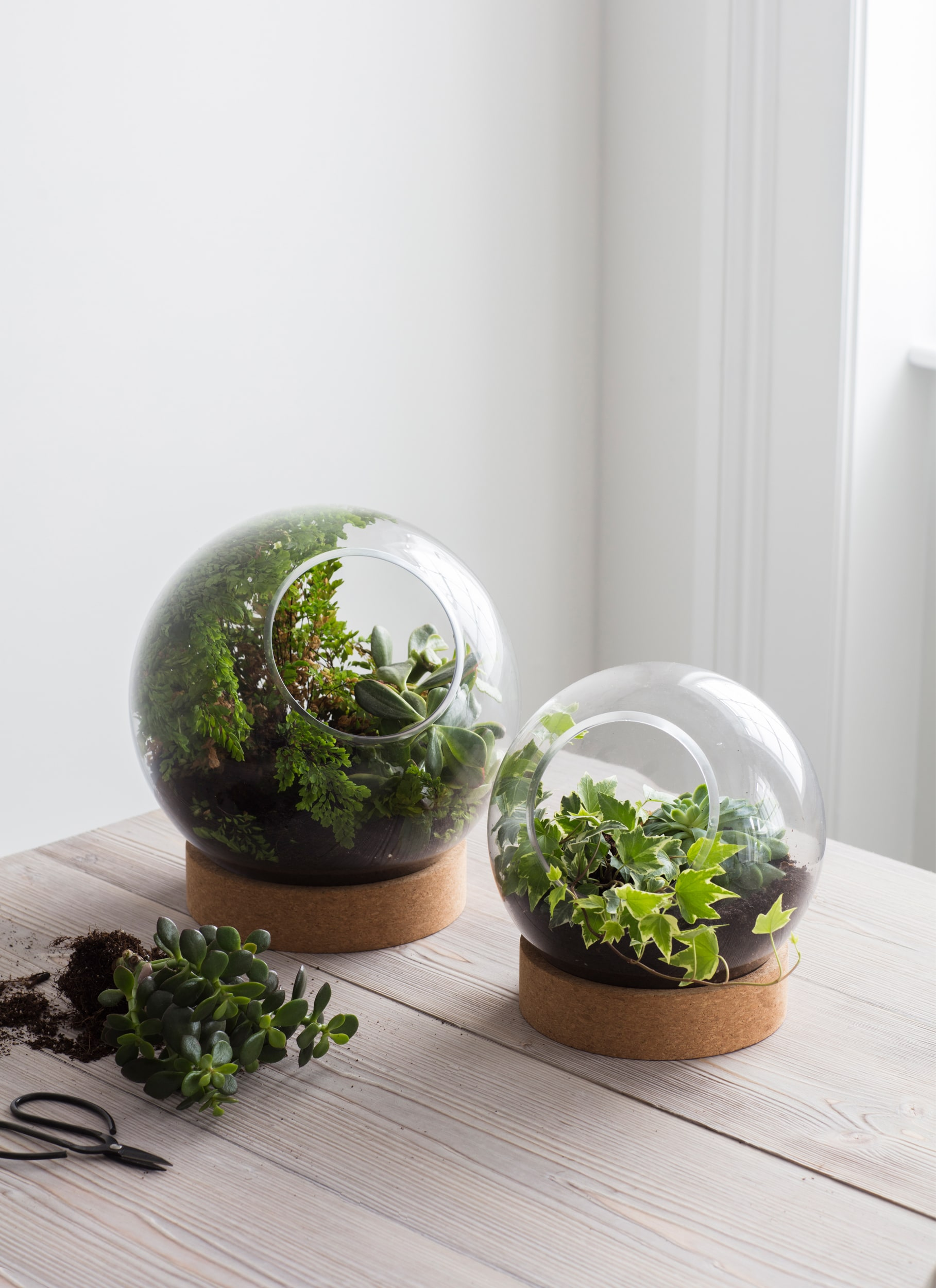 Glass and Cork Tabletop Terrarium in Small or Large | Garden Trading