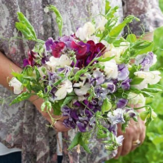 Vintage Silk Sweet Pea Mix