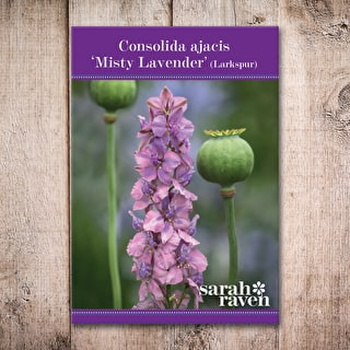 Consolida ajacis 'Misty Lavender'