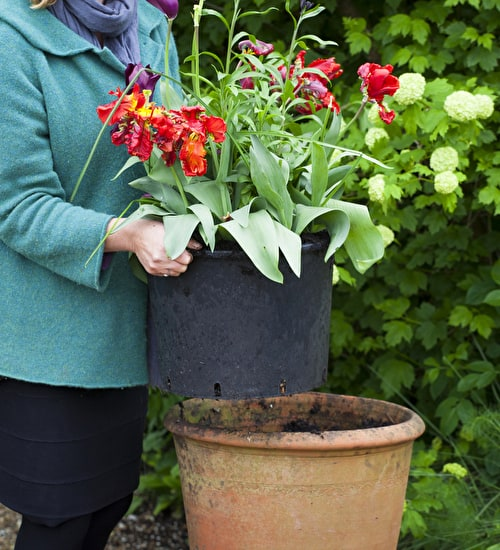 Pots for Successional Planting