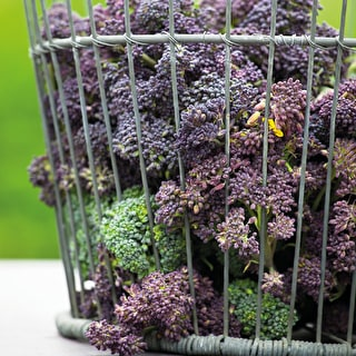 Broccoli 'Cardinal' (Purple Sprouting)