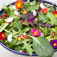 Super Hardy Winter Salad Leaf Mix
