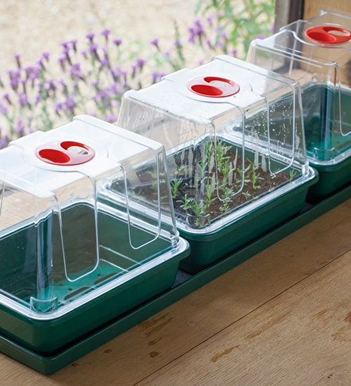 Windowsill Propagator Kit