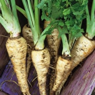 Parsnip 'Tender and True'