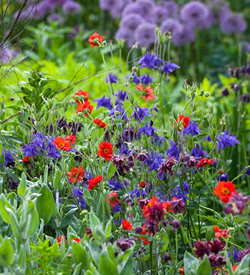 The May Flowering Border Collection
