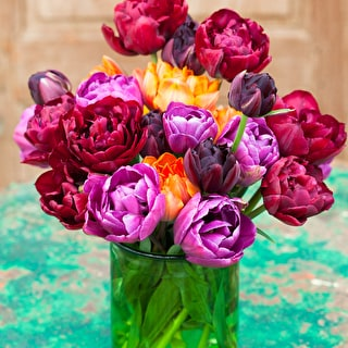 Dark Peony Flowered Tulip Collection