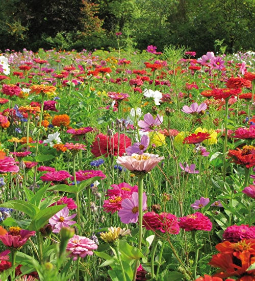 Sow Your Own Flower Meadow