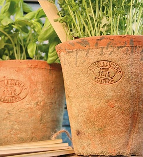 Aged Terracotta Pots