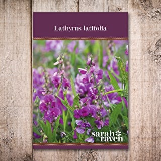 Lathyrus latifolia Colour Mix
