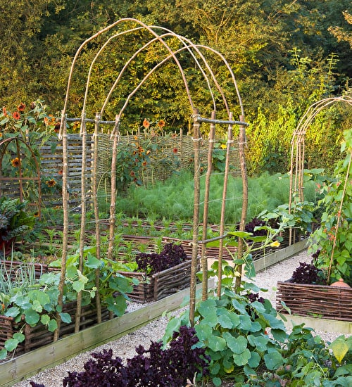Square Metre Veg Plot 2