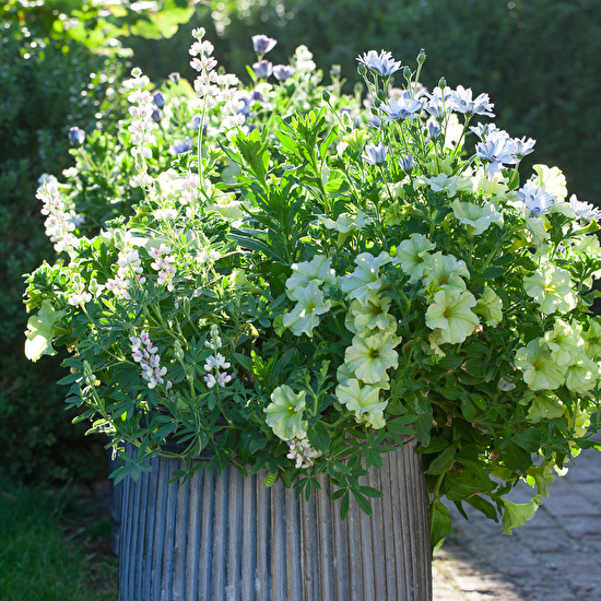 Garden-ready Container Plants