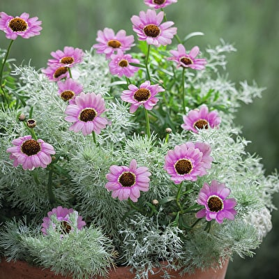 Forever Flowering Pot Collection