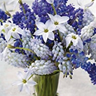 Blue and White Spring Collection