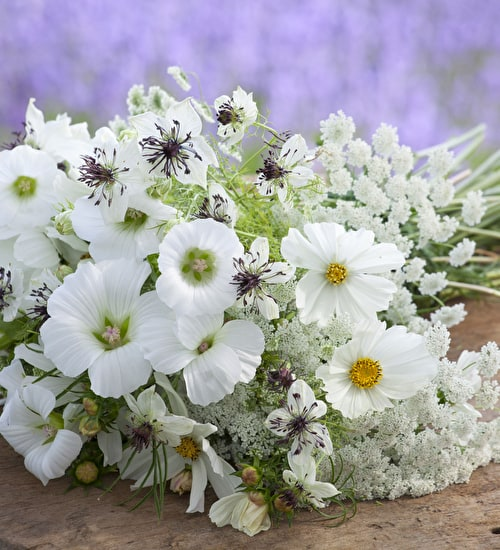 Flowers for a White Garden Collection