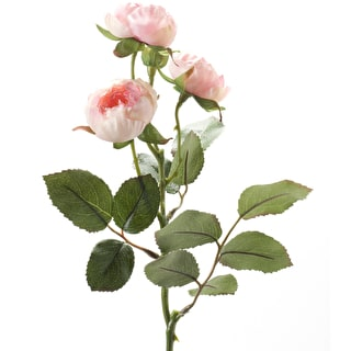 Short-stem Spray Rose