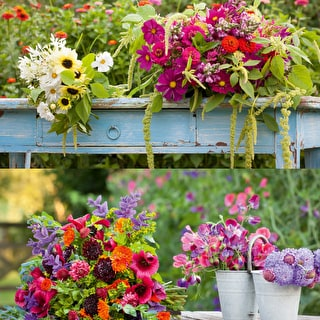 Cutting Patch Seed Collections - Hardy and Half-hardy SPECIAL OFFER