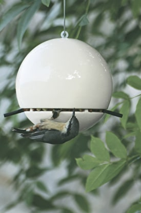Birdball Peanut Feeder